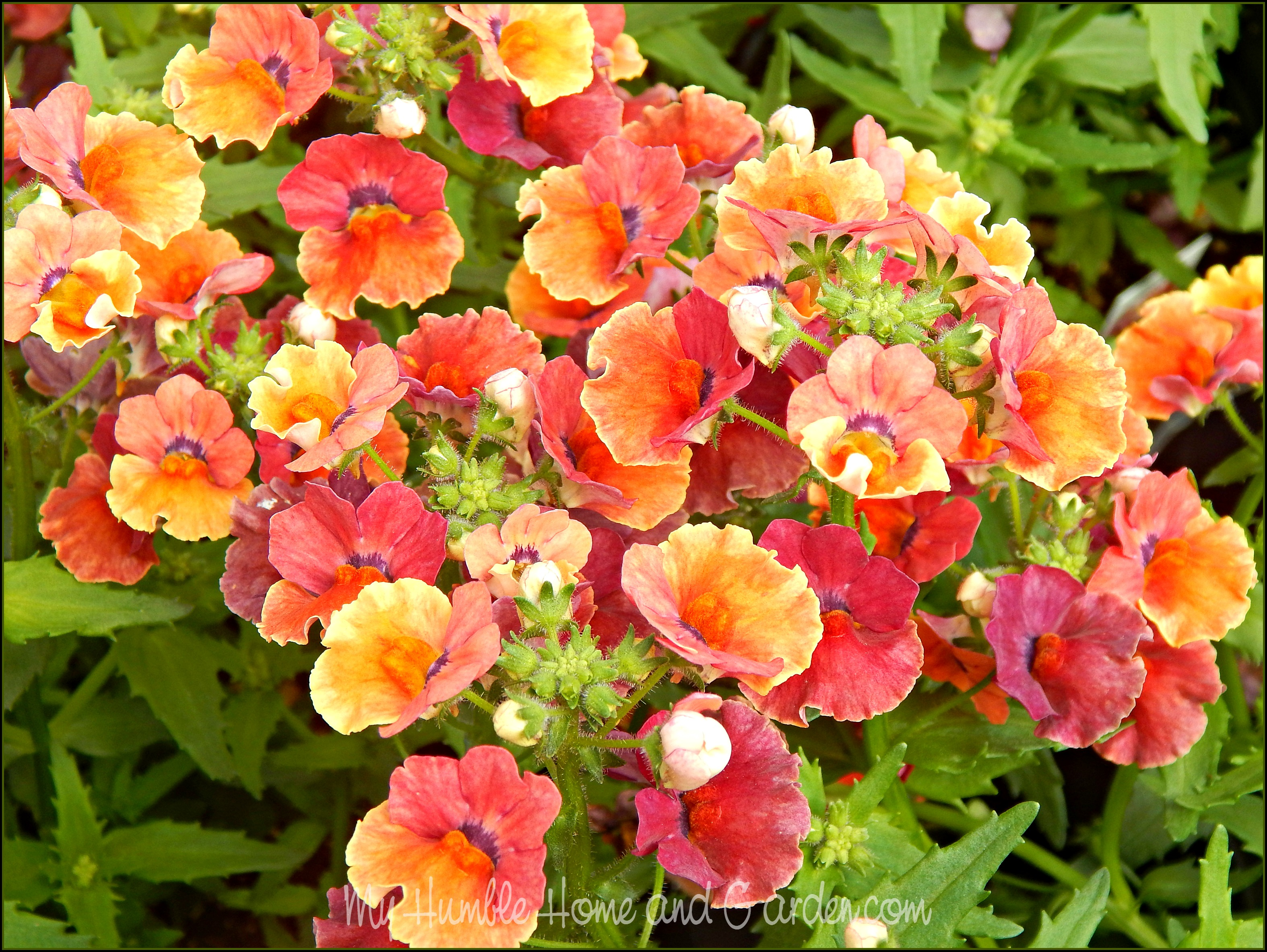 Spring gardening ideas and color inspiration my humble for Spring garden ideas